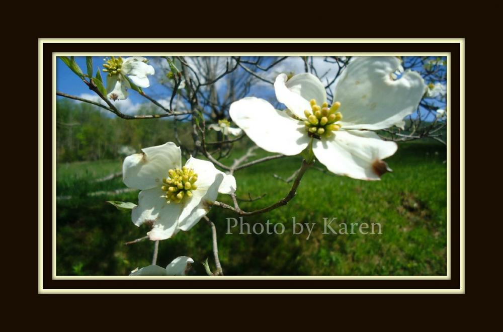 Dogwood's End 5 x 7 Original Photograph, other sizes available